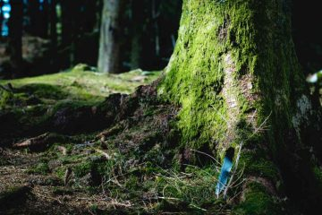 biomasse energie arbre