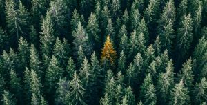 internet vert qui plante des arbres avec ecosia