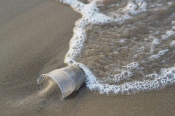 pollution plastique gobelet usage unique